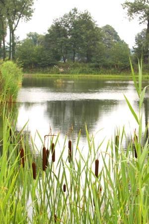 Zdjęcie na staw przez trawy i tatarak